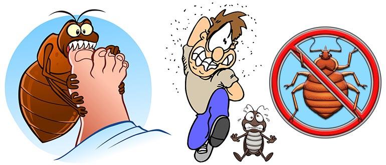 Способы быстрого избавления от последствий укусов клопов