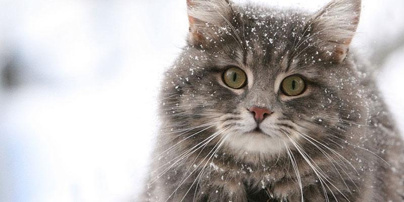 Кусают ли клопы кошек и собак?