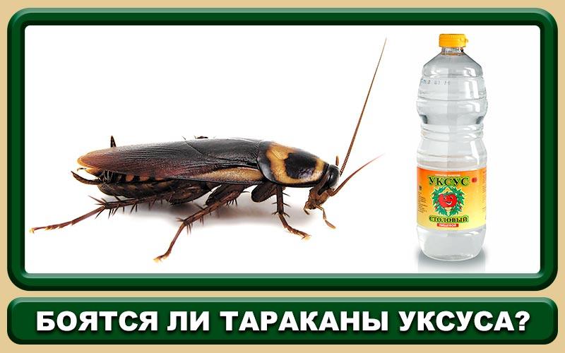 Топ 10 самых эффективных народных средств от тараканов