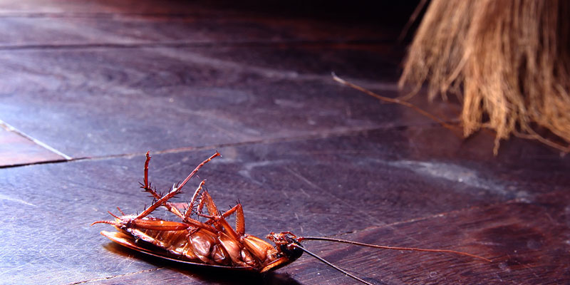Борная кислота от тараканов - эффективность и использование