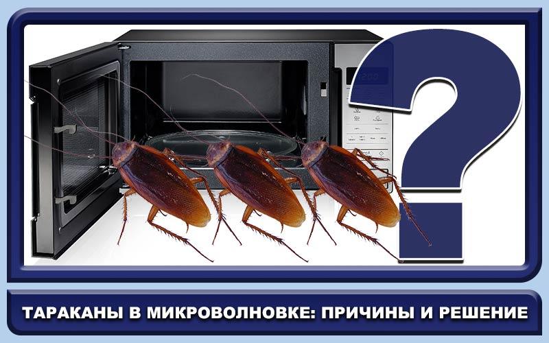 Как избавиться от тараканов в микроволновке