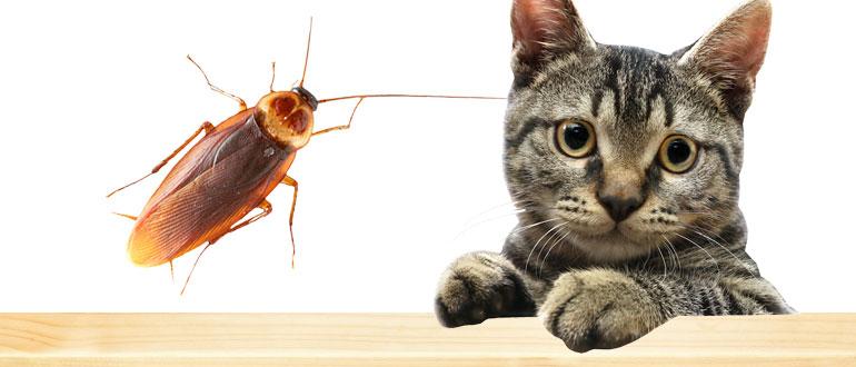 Опасен ли гель от тараканов для кошки