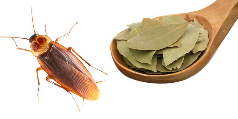 Лавровый лист от насекомых