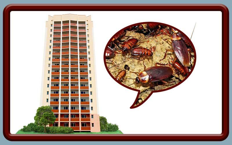 Потравить тараканов в подъезде