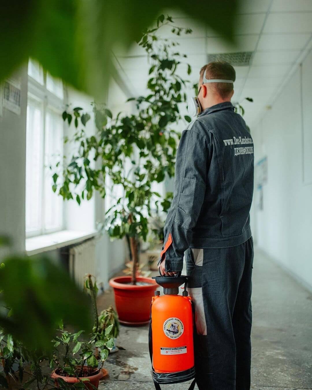 Дезинфектор дезинфицирует комнатные растения от вредителей